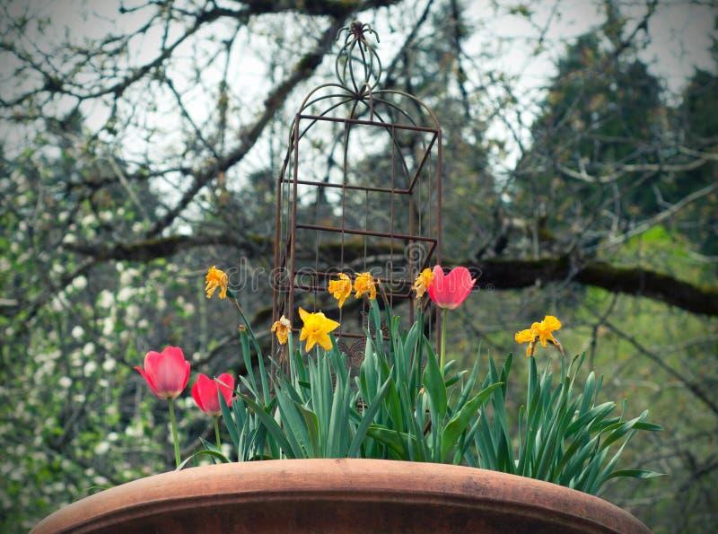 Röda och gula tulpan och påskliljor i tappningkrukan i trädgården royaltyfri foto