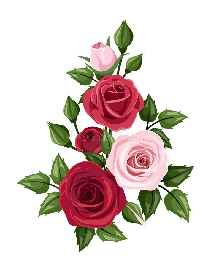 Röda och rosa ro också vektor för coreldrawillustration stock illustrationer