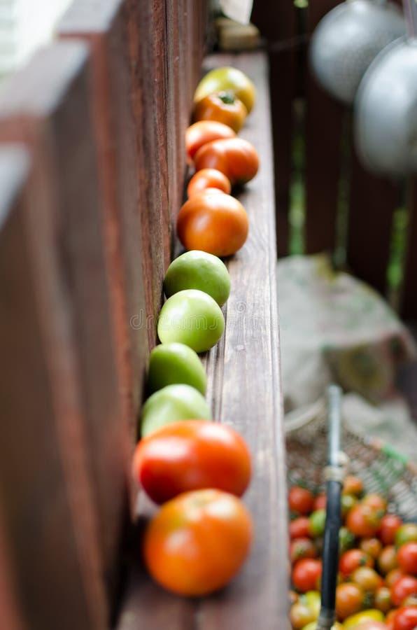 Röda orange och gröna tomater arkivfoton