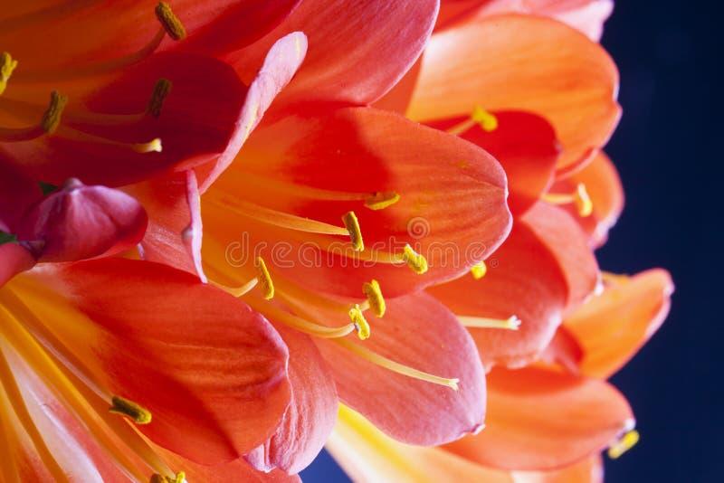 Röda orkidér i en grupp royaltyfria bilder