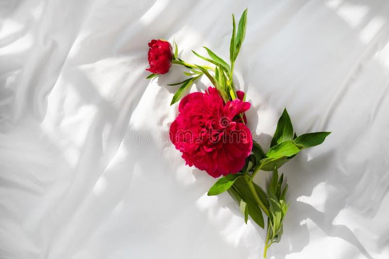Röda pionblommor på säng fotografering för bildbyråer