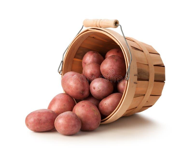Röda potatisar i en korg royaltyfri foto
