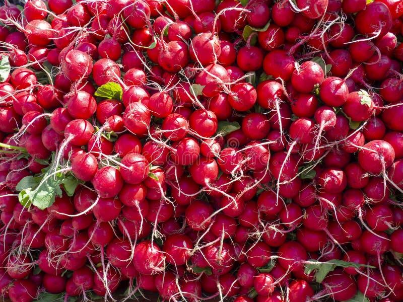 Röda rädisor som är till salu på en jordbruksmarknad i New York ljus red f?r bakgrund arkivfoto