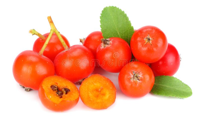 röda rönnbär med det gröna bladet som isoleras på vit bakgrund Makro arkivfoton