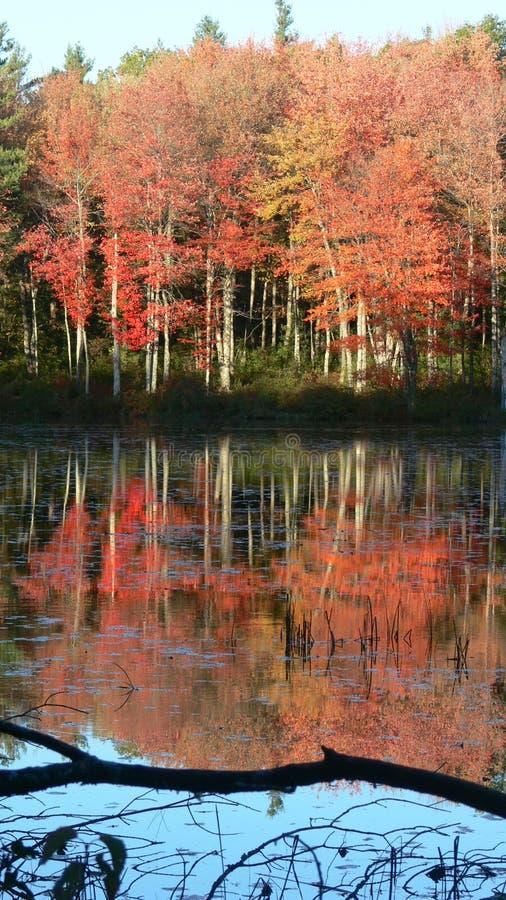 röda reflekterade trees för fall royaltyfri foto