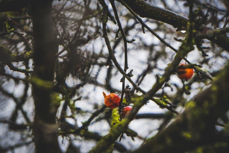 röda reflexioner royaltyfria bilder