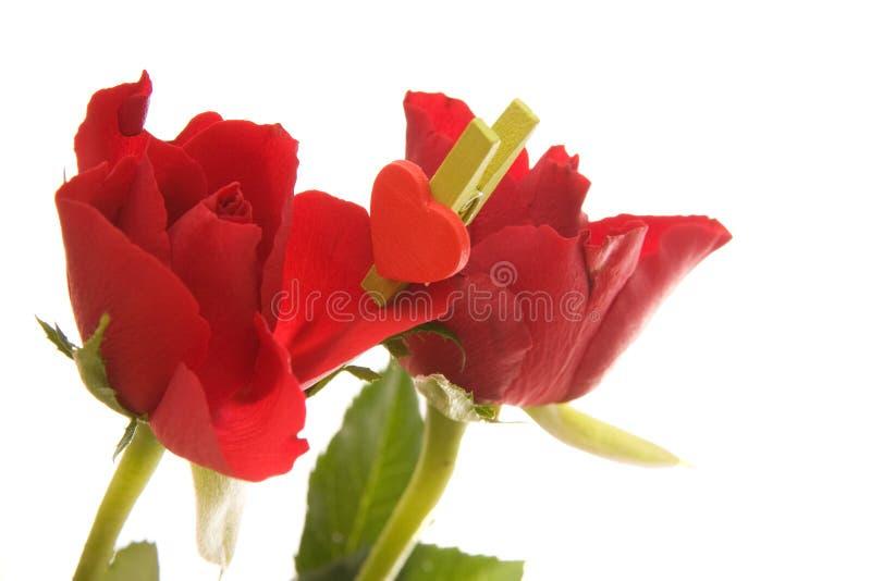 Download Röda ro fotografering för bildbyråer. Bild av natur, hjärtor - 3526665