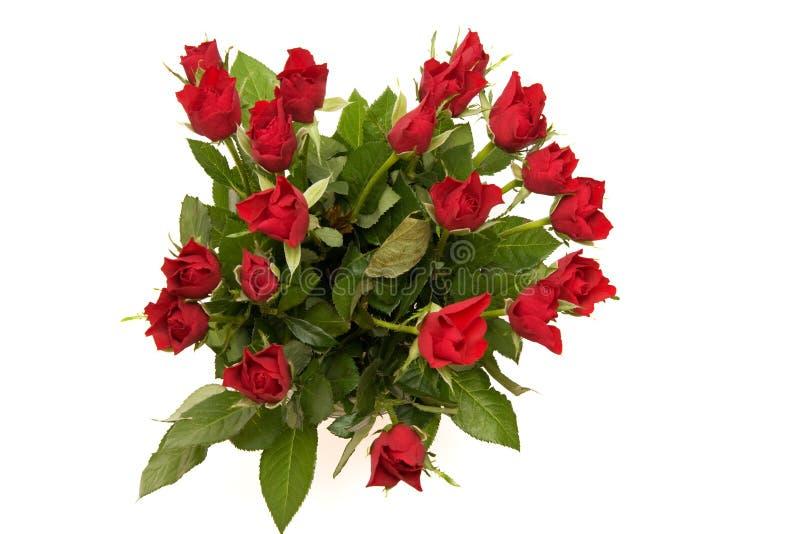 Download Röda ro fotografering för bildbyråer. Bild av leaf, många - 3533485