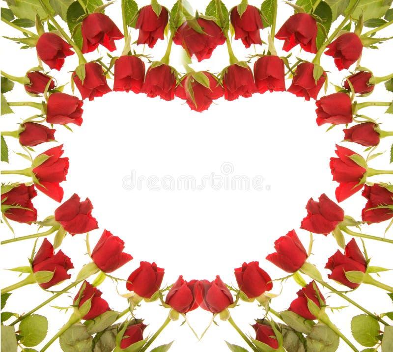 Download Röda ro arkivfoto. Bild av fira, roman, blom, föreslå - 3545398