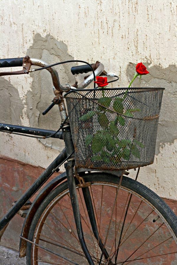 Röda ro i korg av den gammala rostiga cykeln royaltyfria bilder