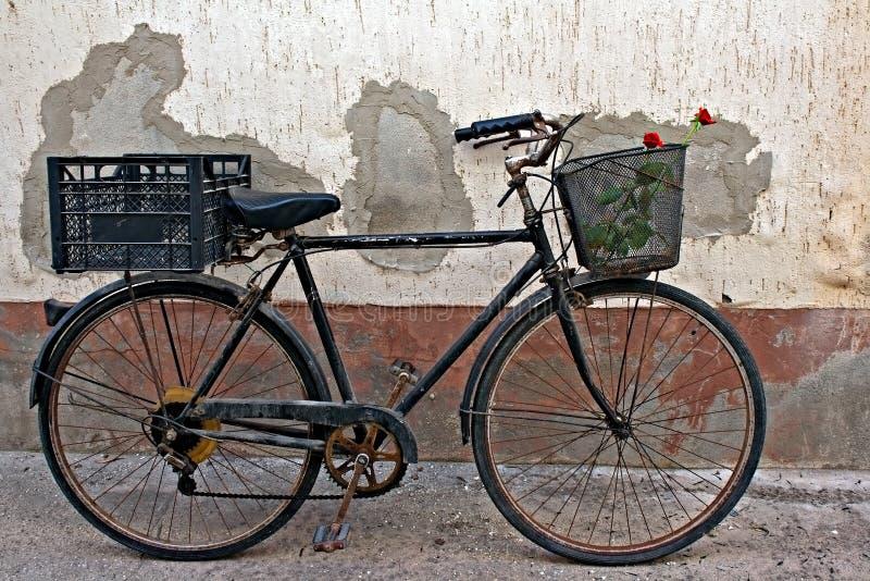Röda ro i korg av gammal rostig cykel 2 royaltyfri foto