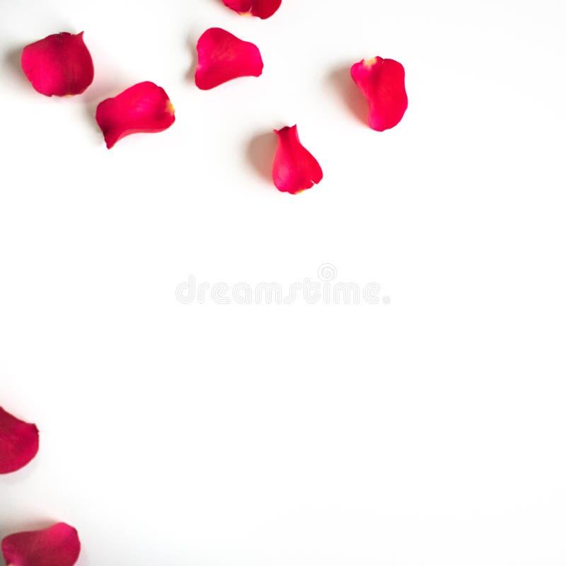 Röda rosa kronblad på en vit tabell/bakgrund arkivbild