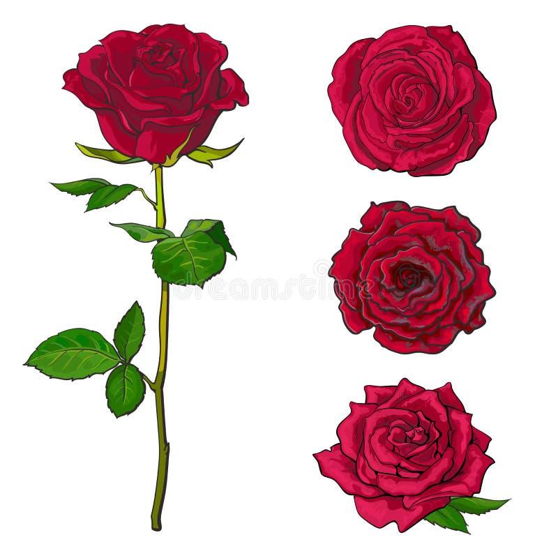 Röda rosblom ställer in med filialen av sommarblomman, och olika knoppar skissar in stil stock illustrationer