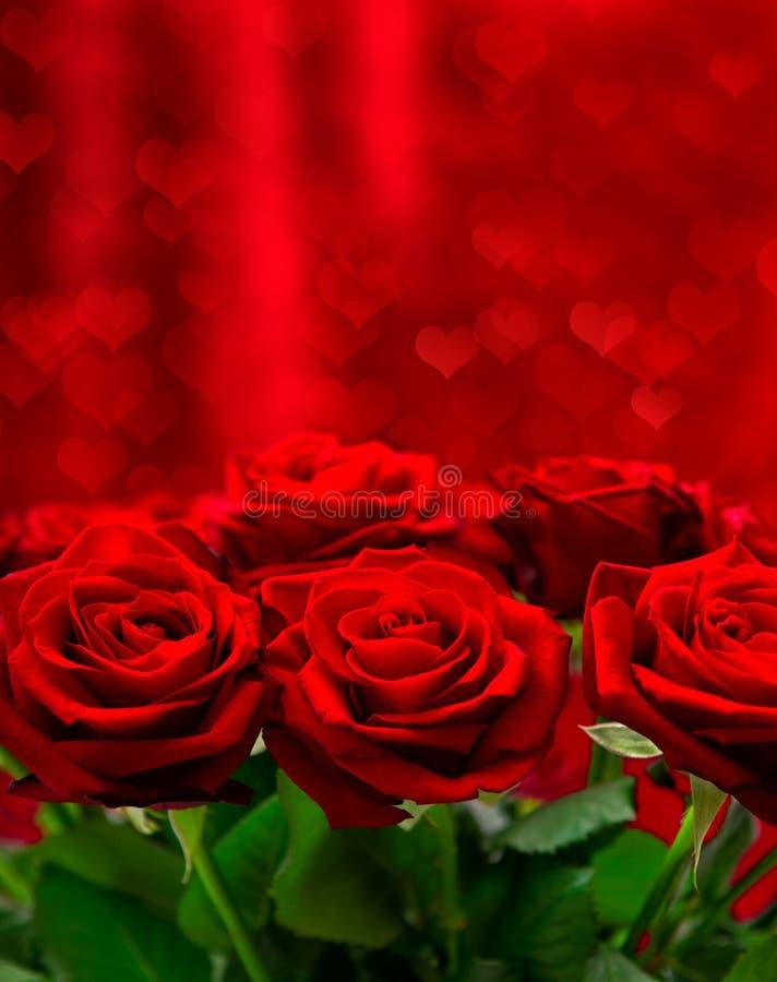 Röda rosor över valentindagbakgrund med hjärtor royaltyfri bild