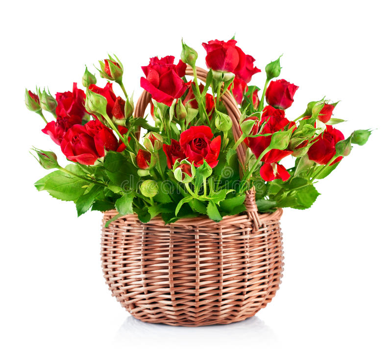 Röda rosor för bukett i korg fotografering för bildbyråer