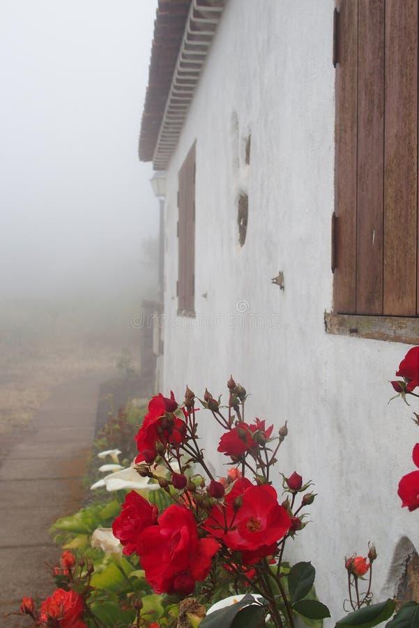 Röda rosor i gammalt hus arbeta i trädgården i dimmig dag arkivfoto
