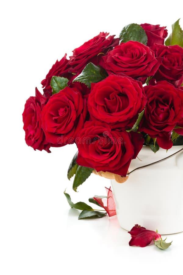 Röda rosor i hink arkivfoton