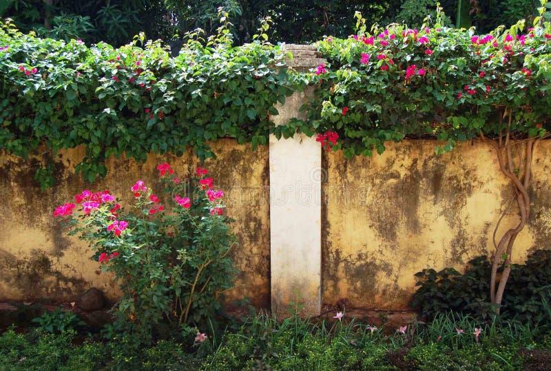 Röda rosor på väggen Etiopien royaltyfri bild