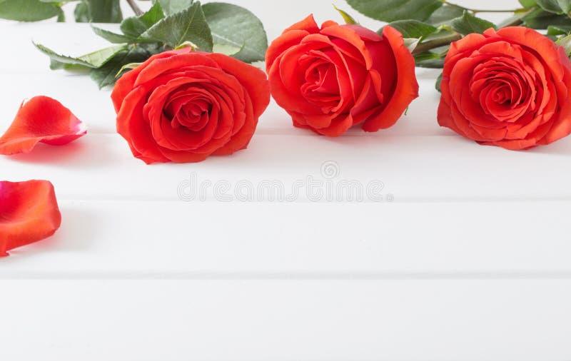 Röda rosor på vit träplankabakgrund royaltyfri fotografi