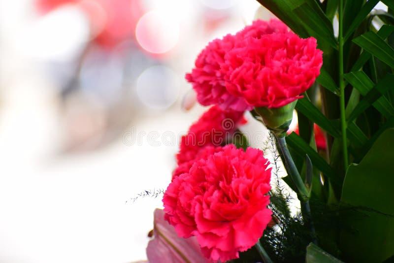Röda så härliga blommor royaltyfria foton