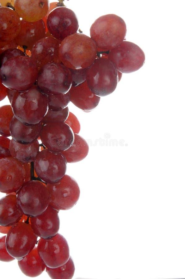 Röda seedless druvor royaltyfri foto