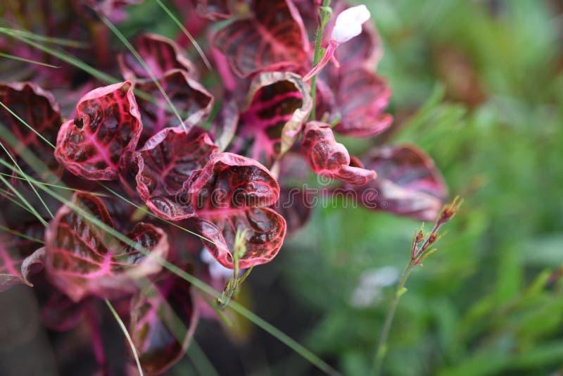 Röda sidor och grönt gräs royaltyfri bild