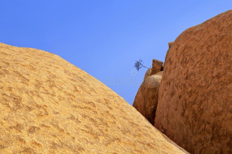 Röda skalliga granitmaxima, ett grönt torkat träd, bakgrund för blå himmel, den forntida apelsinen vaggar, naturliga gula stenar, arkivfoton