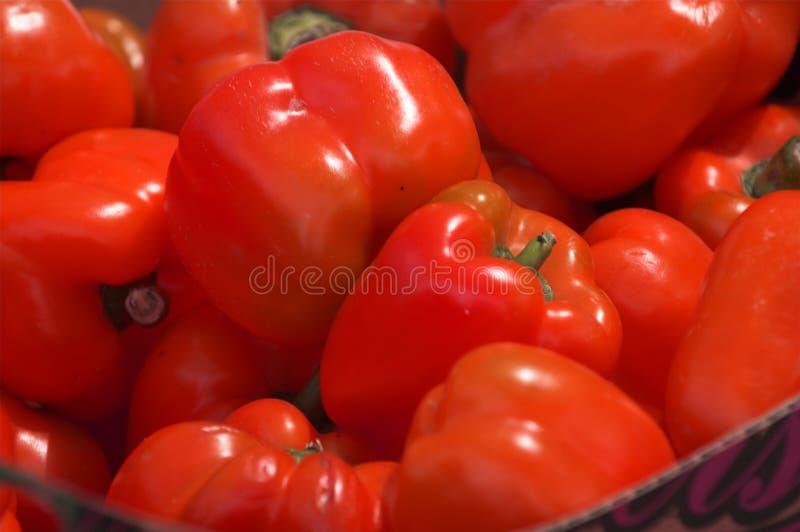 röda spansk peppar arkivfoton