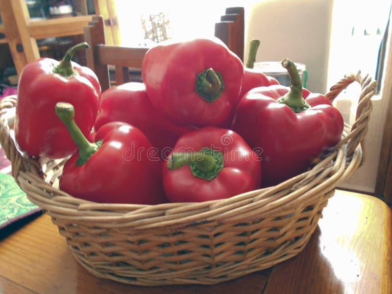 Röda spanska peppar i en korg fotografering för bildbyråer