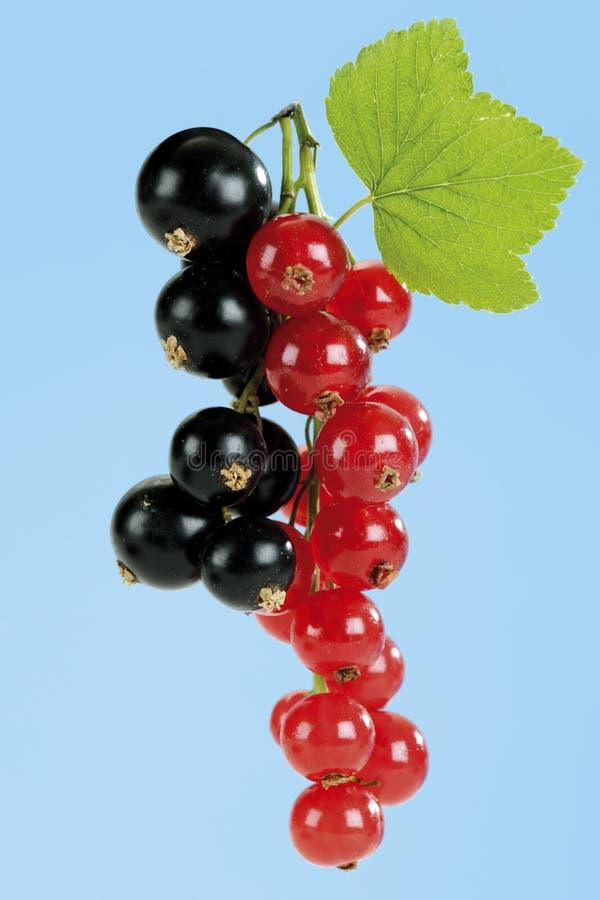 röda svarta vinbär arkivbild