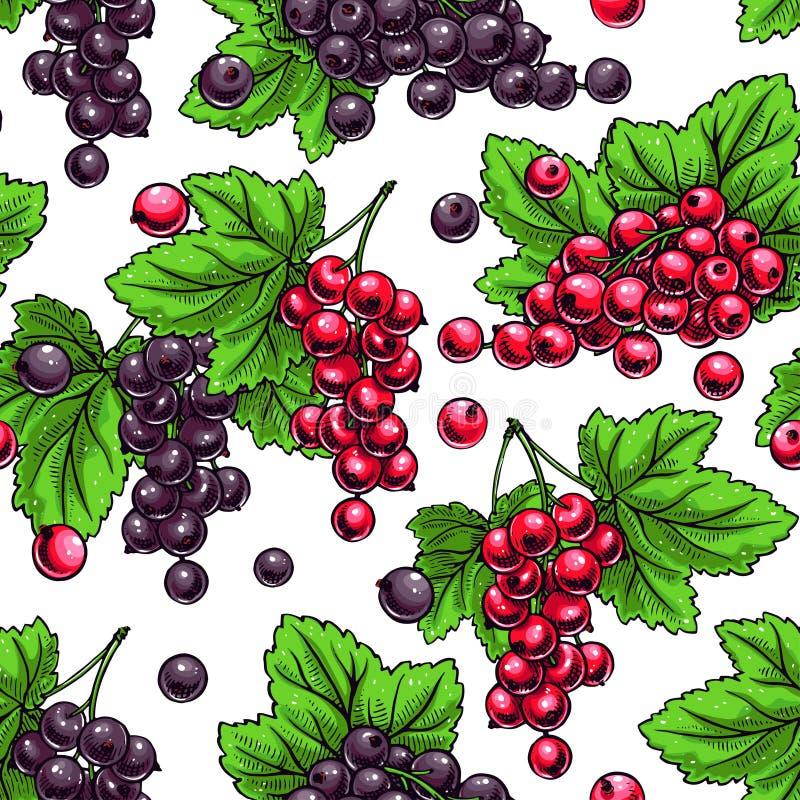 röda svarta vinbär stock illustrationer