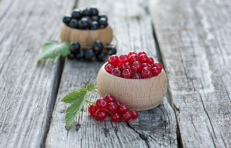 röda svarta vinbär royaltyfri fotografi