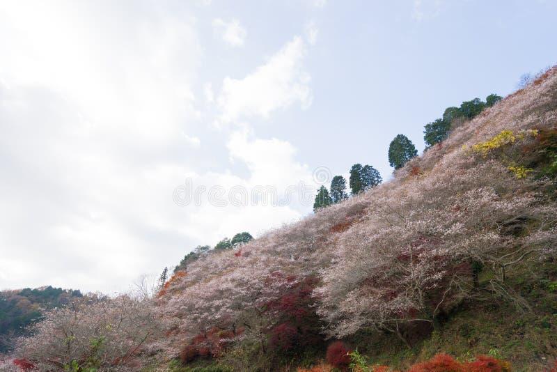 Röda tjänstledigheter för höstlandskapbakgrund i Obara Nagoya Japan royaltyfria bilder