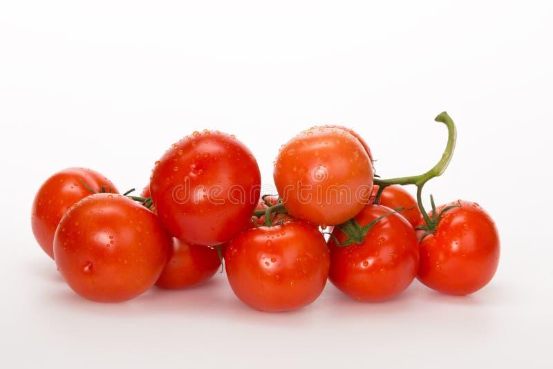 Röda tomater med bevattnar tappar royaltyfri bild