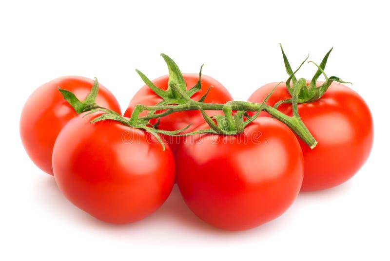 Röda tomater som isoleras på vit bakgrund arkivfoto