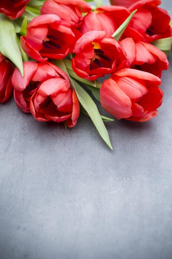 Röda tulpan på en träbakgrund arkivbilder