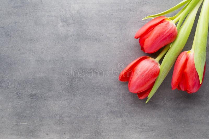 Röda tulpan på en träbakgrund royaltyfria foton