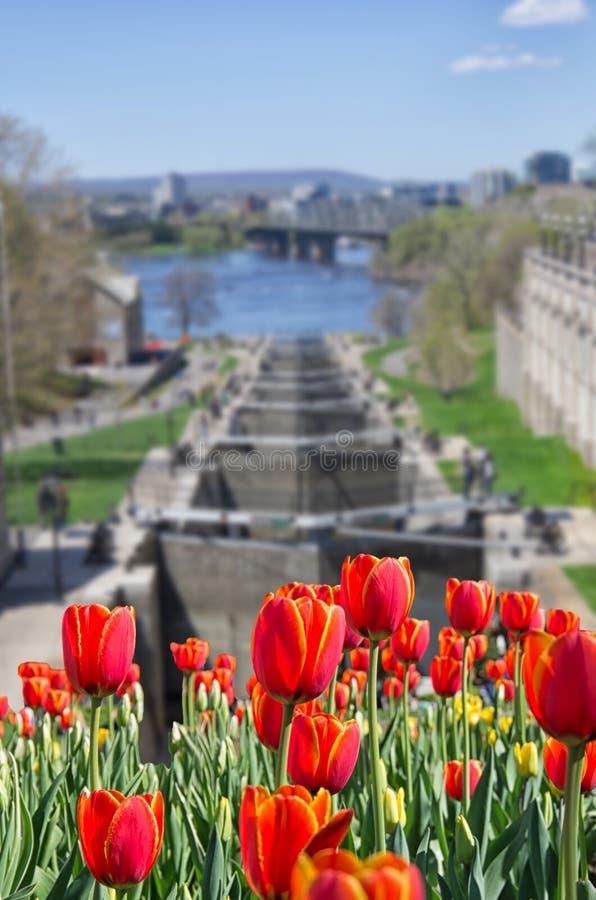 Röda tulpanblommor framme av den Ottawa låsstationen royaltyfri foto