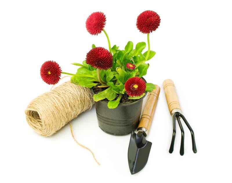 Röda tusenskönor och trädgårds- hjälpmedel royaltyfri bild