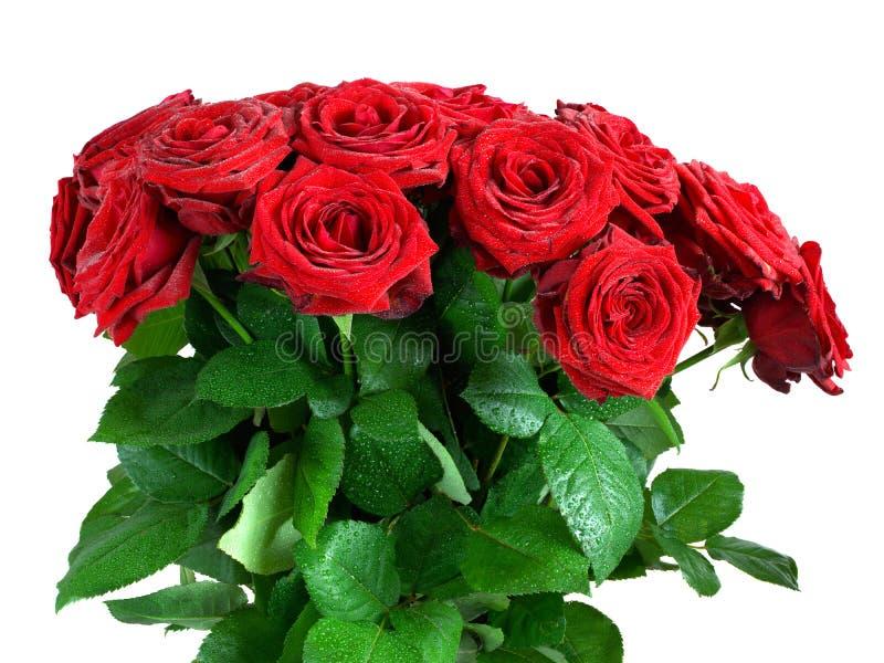 Röda våta rosor blommar buketten som isoleras på vit arkivfoton
