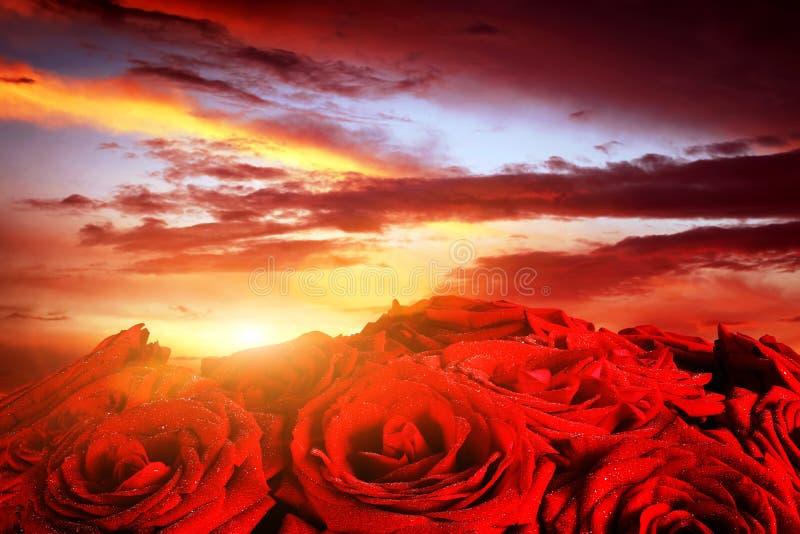 Röda våta rosor blommar på dramatisk romantisk solnedgånghimmel royaltyfri foto