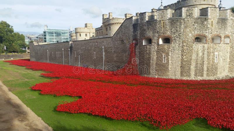 Röda vallmo häller från torn av London royaltyfri bild