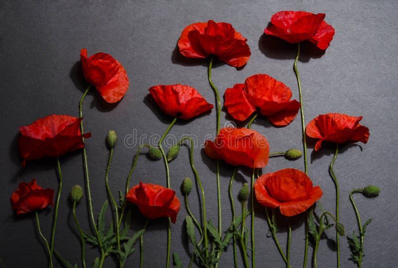 Röda vallmo på grå bakgrund royaltyfri fotografi