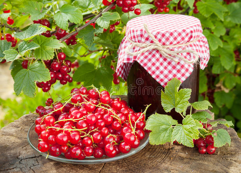 Röda vinbär och krus av driftstopp arkivfoto