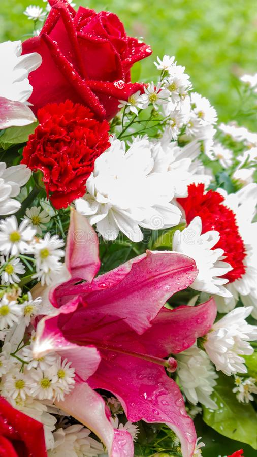 Röda vita blommor för ros och i bukett fotografering för bildbyråer