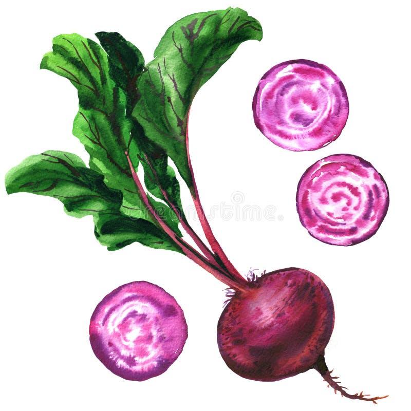 Rödbeta med den isolerade sidor, nya hel och skivabeta, ställde in beta, mat, grönsaken, vattenfärgillustration på vit stock illustrationer