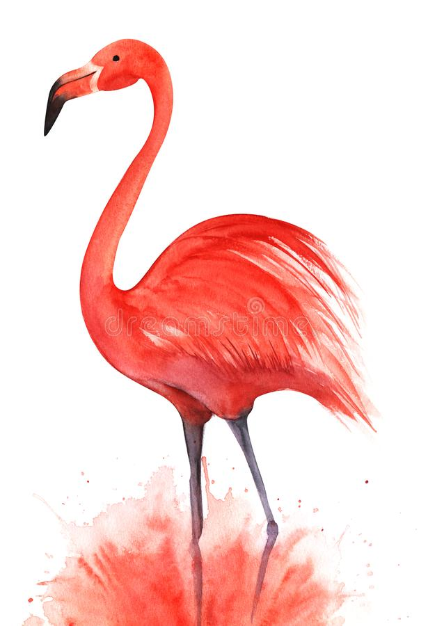 Rödrosa flamingo Stående på lilac-ben i ett rosa sprutmoln Svart ögonpunkt Handritad dekorativ vattenfärg stock illustrationer