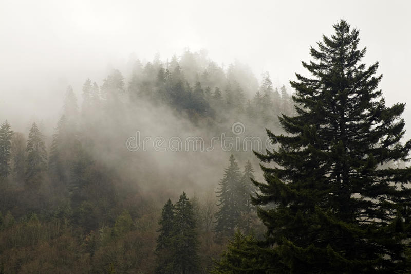 rökiga stora berg för höstevergreen fotografering för bildbyråer