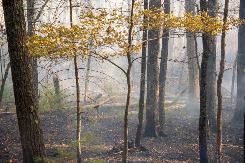 Rökning efter skogsbrand royaltyfria bilder