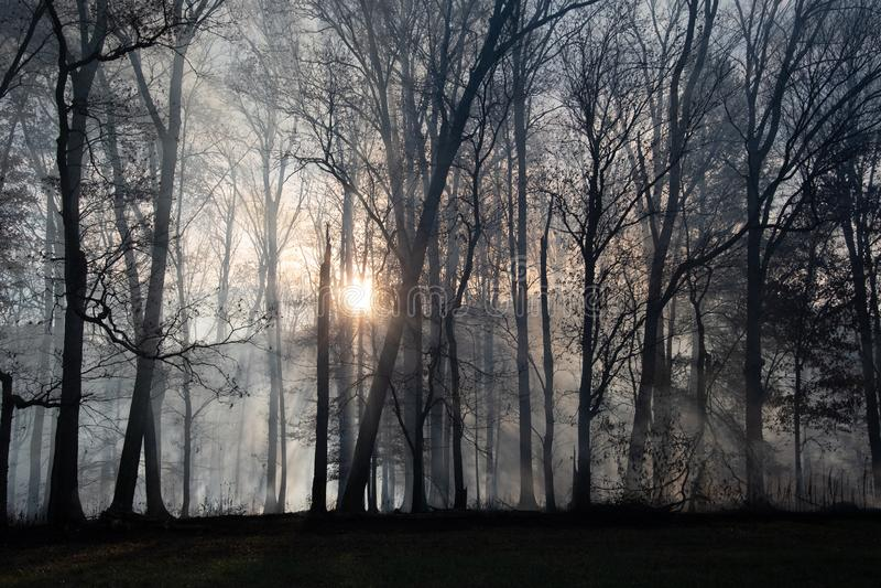 Rökning efter skogsbrand royaltyfria foton